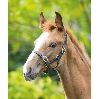 Blenheim Adjustable Leather Headcollar
