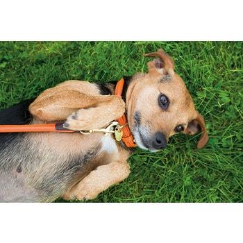 Digby & Fox Rolled Leather Dog Collar